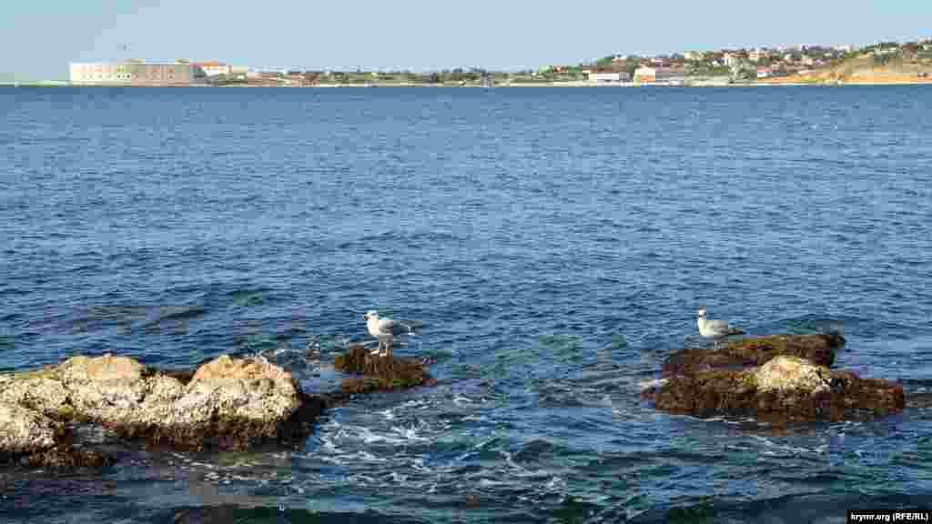 Чайки отдыхают на скалах в Севастопольской бухте
