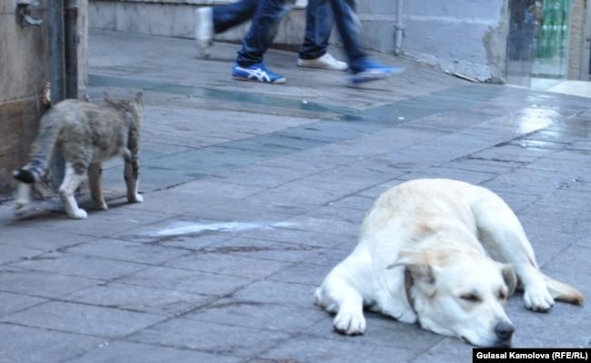 Беспризорные собаки и кошки на стамбульской улице