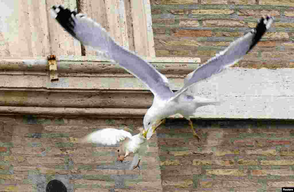 "One of two ""doves of peace"" is attacked by a seagull seconds after its release by a youth as part of an Angelus prayer conducted by Pope Francis in Saint Peter's square at the Vatican. The other dove was similarly attacked by a crow. (Reuters/Alessandro Bianchi)"