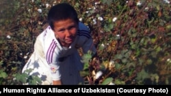 Labor Abuses In Uzbekistan's Cotton Fields
