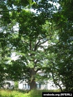 Трохсотгадовы дуб