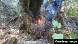 Лесной пожар в Дагестане