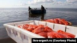 Рыбаки на промысле
