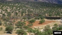 ماههاست که نگرانیهای عمیقی در مورد نابودی جنگلهای بلوط زاگرس بیان میشوند