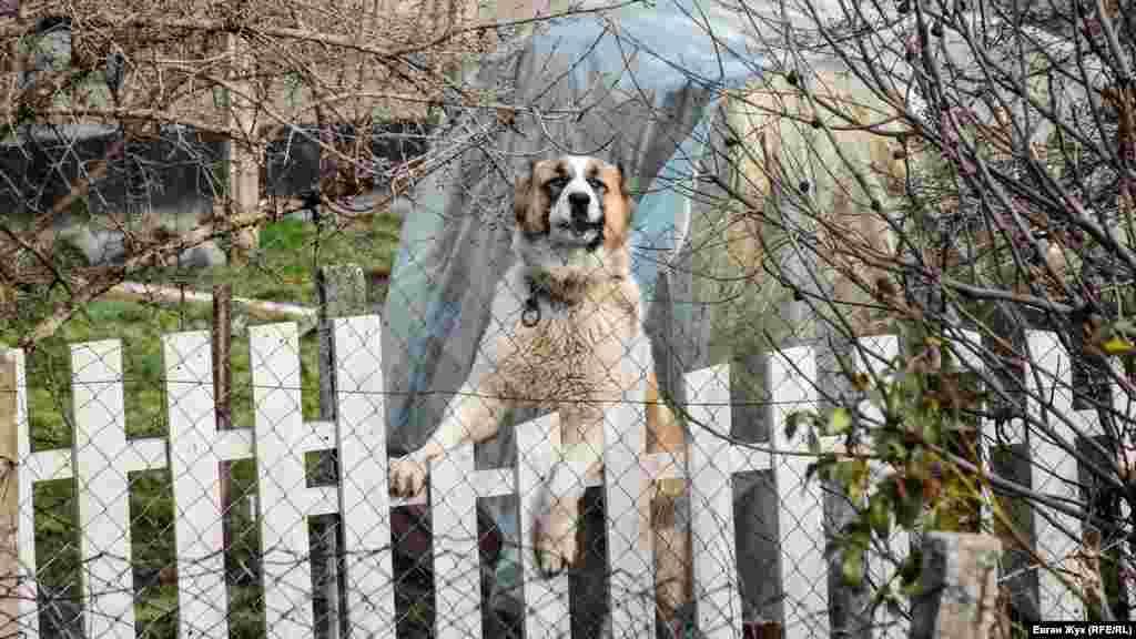 Суворий охоронець дивиться через паркан