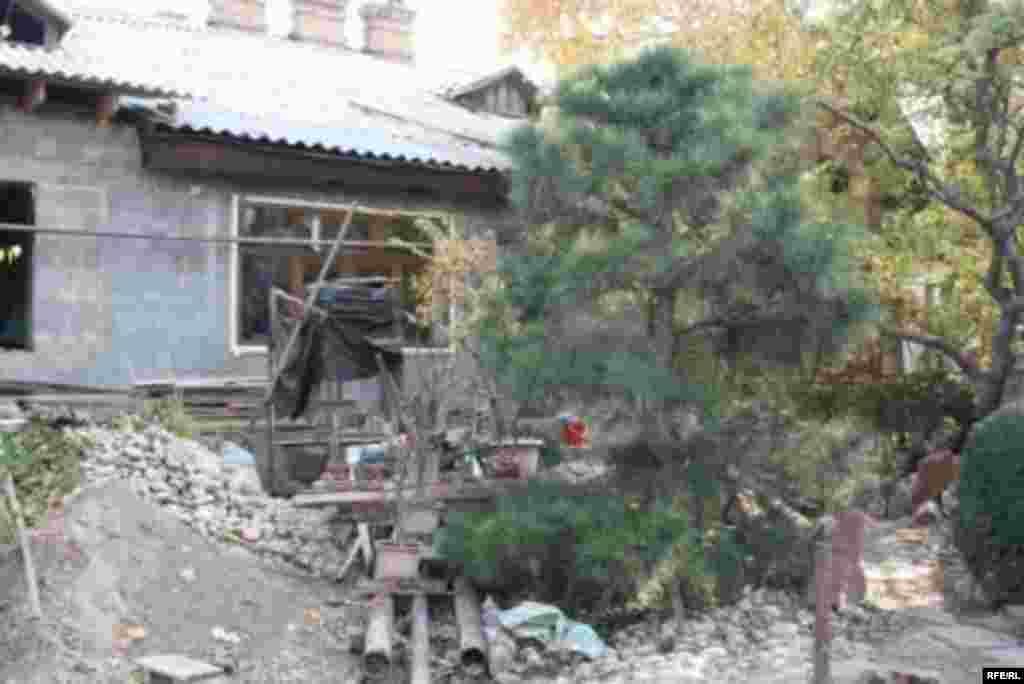 Бонсай в бишкекском дворике #13
