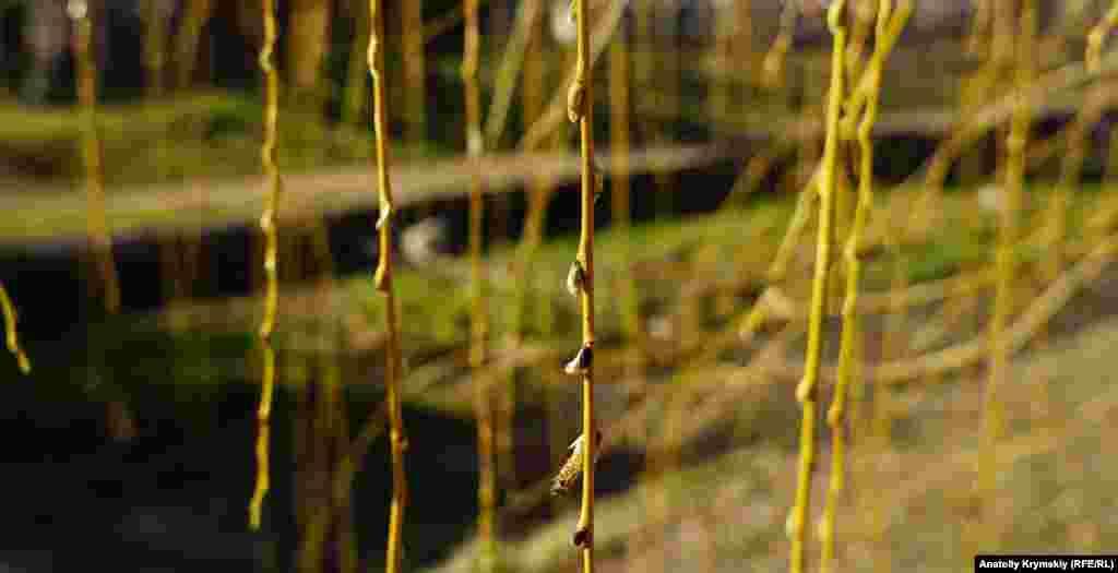 Tal tereginiñ mına-mına yapraqları açılacaq