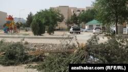 В Ашхабаде снова вырубают тенистые деревья