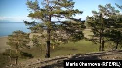 Шаманский лес на острове Ольхон
