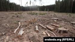 Высечаныя лес на месцы будаўніцтва індустрыяльнага парку