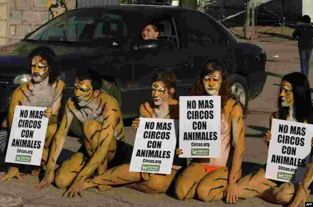 Актывісты абароны жывёлаў пратэстуюць у Мадрыдзе супраць выкарыстаньня жывёлаў у цырку - Фота: AFP
