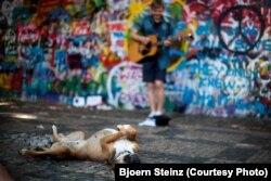 Сабака слухае музыку каля «Сьцяны Ленана» ў Празе.