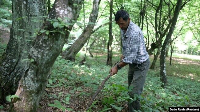 Nukiq duke kërkuar mbetje njerëzore në pyll afër shtëpisë së tij.