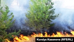 Kazakhstan - Fire in Aktobe region. 03Jul2010.