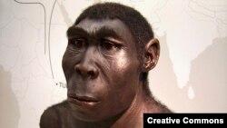 Научная реконструкции Homo Erectus. Одного из многочисленных гоминидов обитавших на Земле