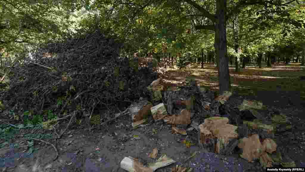 А со старыми деревьями на краю парка у Малого Салгира не церемонились