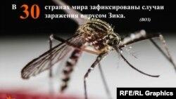 Зика вирусу чиркейден жугат