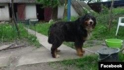 Собака Леся