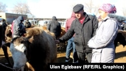Скотный рынок в Кыргызстане