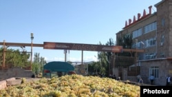 Armenia -- A truckload of grapes is transported to a storage facility in Ararat region run by the Yerevan Brandy Company.