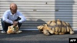 توکیو؛ آقای هیسائو میتانی و بونچان، لاکپشت ۱۹ سالهاش