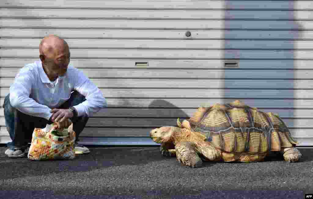 Хисао Митани - хозяин черепахи. Каждый день они совершают прогулку по улицам Токио