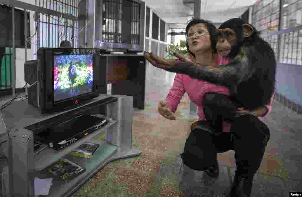 Zoo staff member Sholpan Abdibekova and Tomiris, a 5-year-old chimpanzee, react as they watch a BBC environmental program in a primate winter enclosure in Almaty, Kazakhstan. (Reuters/Shamil Zhumatov)