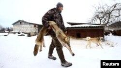 Мужчина со шкурой волка, иллюстрационное фото