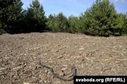 Разварочаныя кучы сьмецьця на пляцоўцы амаль у адзін гектар