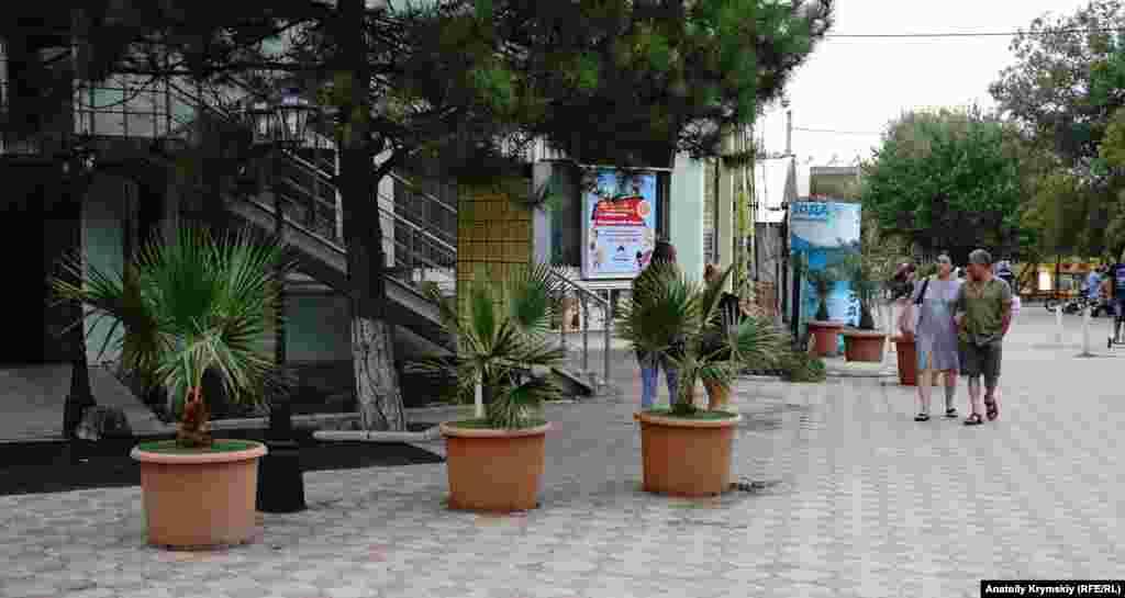 Центр Миколаївки прикрасили пальмами в горщиках