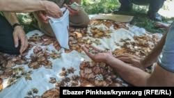 Неравнодушные крымчане собрали и погасили суммы штрафов и для Мумине и Лутфие принципиально – монетами
