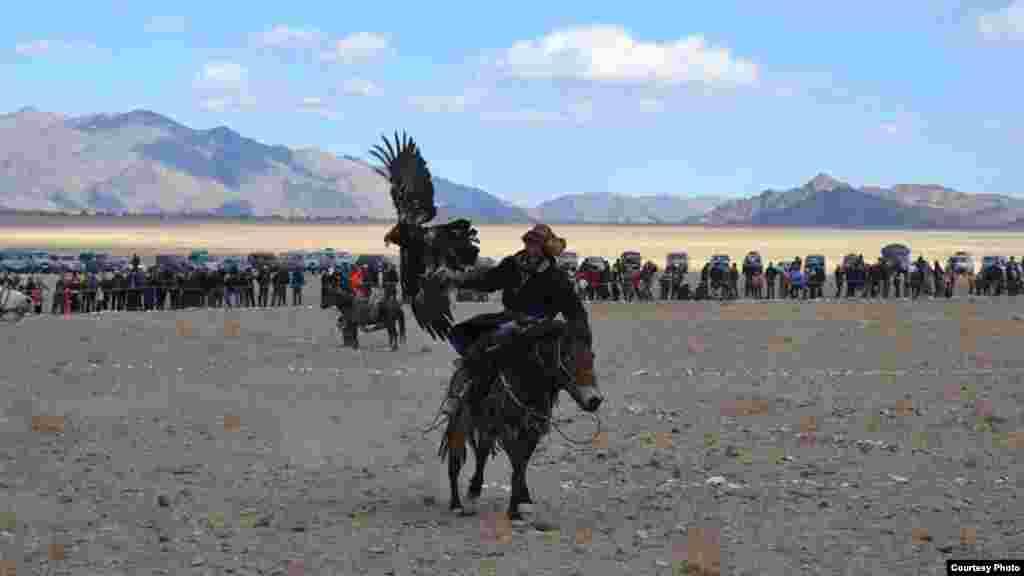 Бүркіттің қомдануы.5 қазан, 2014 жыл. Моңғолия. Баян-Өлгий аймағы.
