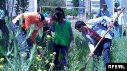 Студенттер көчөт отургузуп жатышат. 12-май, 2010-жыл