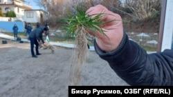"""Според организаторите на неделната акция в """"Росенец"""" плажът е умишлено затревен"""