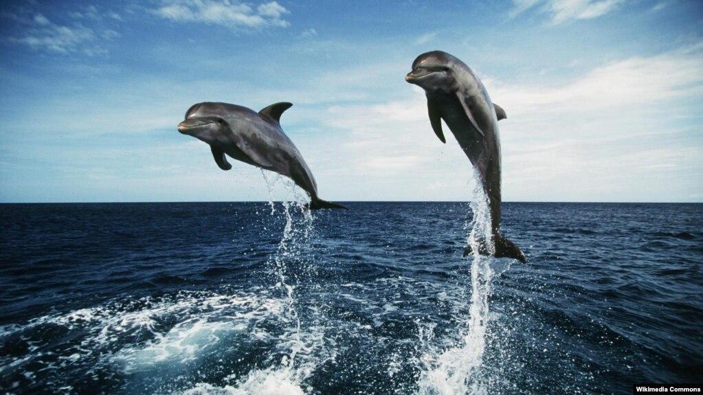 дельфин женского рода