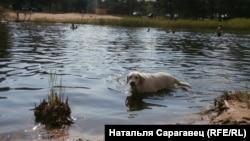 Любанскі р-н, возера Дзікае, Менская вобласьць. Аўтар: Натальля Сарагавец