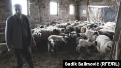 Adil Jahić sa svojim stadom ovaca