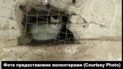 Этот котенок остался внутри подвала