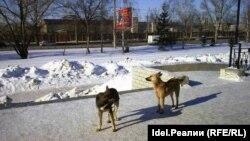 Бродячие псы (архивное фото)