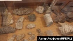 Древние окаменелости из башкирских шиханов