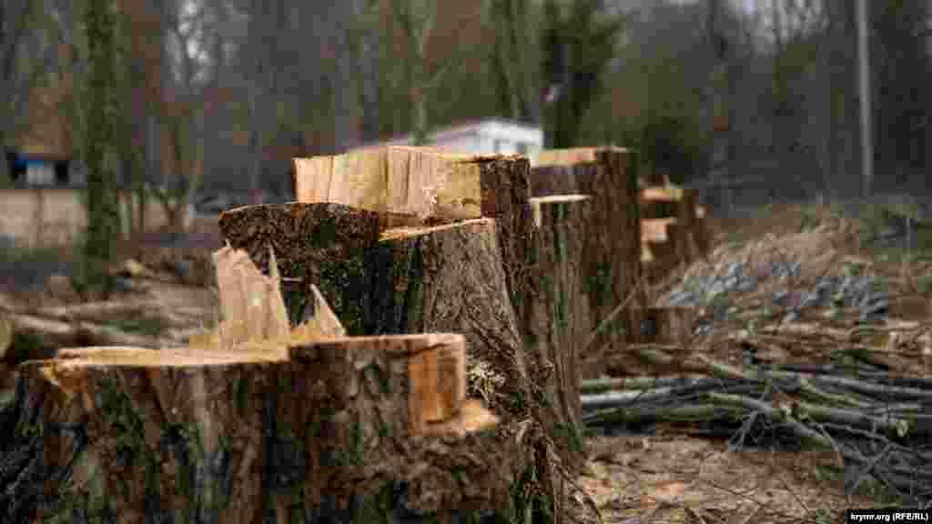 У Гагарінському парку в Сімферополі масово спиляли дерева