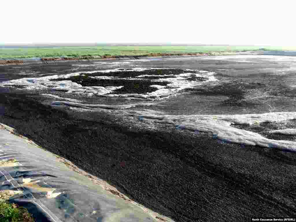 Последствия слива навозной жижи на поля вокруг лагуны