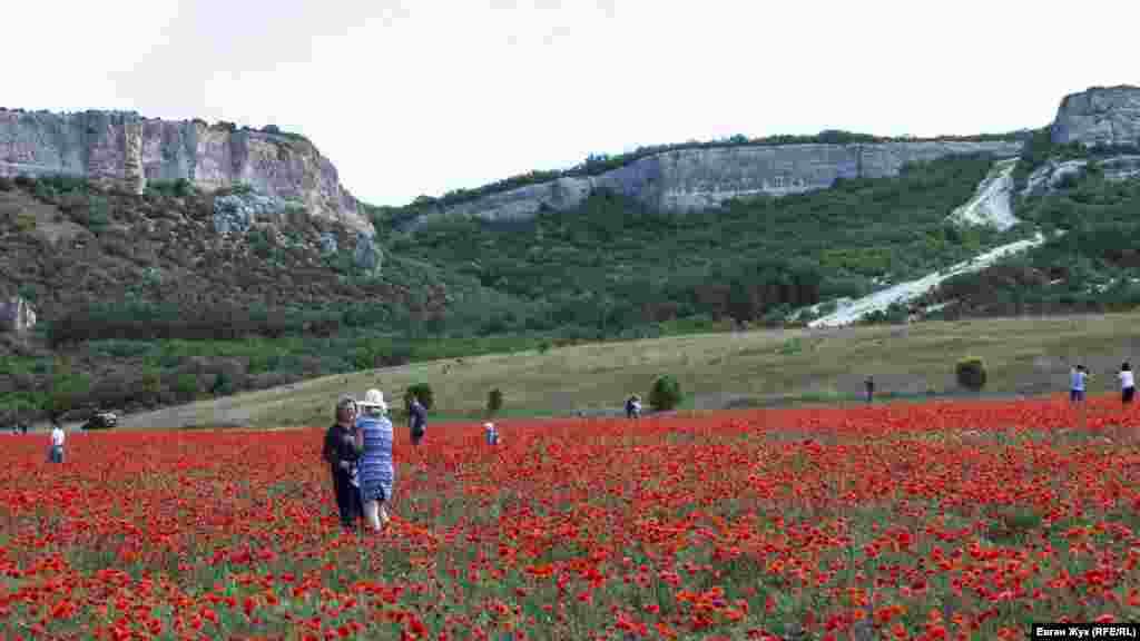 Накануне севастопольцы фотографировались на поросшем маком поле в долине Кара-Коба