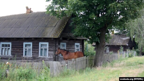 Лактышоўскаму коніку нічога не пагражае — коней невядомая хвароба не бярэ