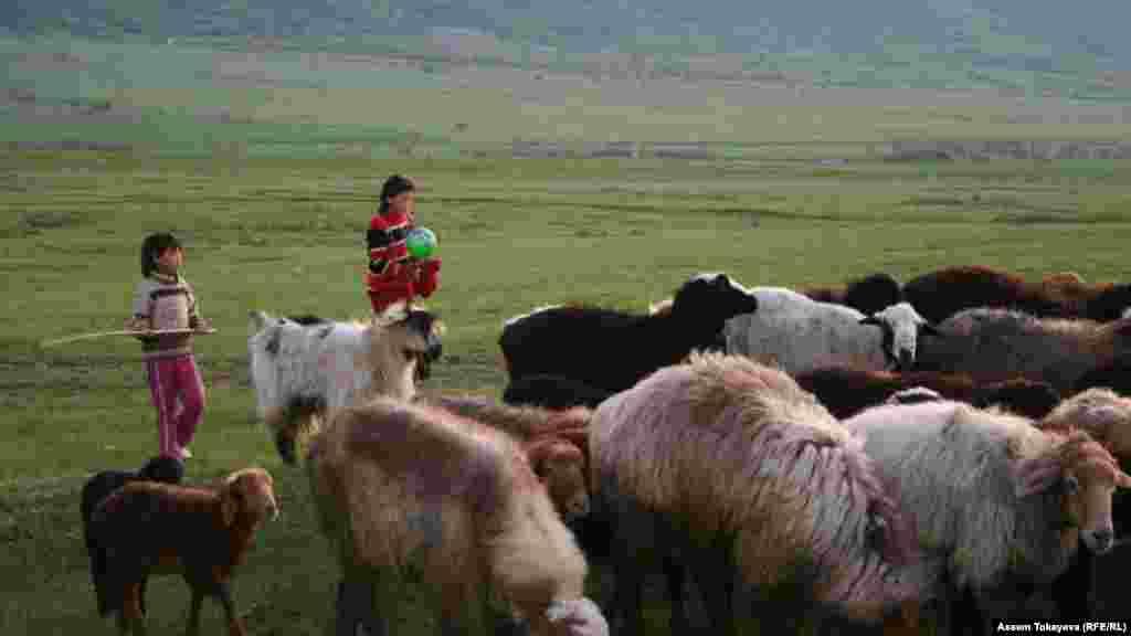 Ақсу-Жабағылы қорығы маңында қой жайып жүрген балалар.