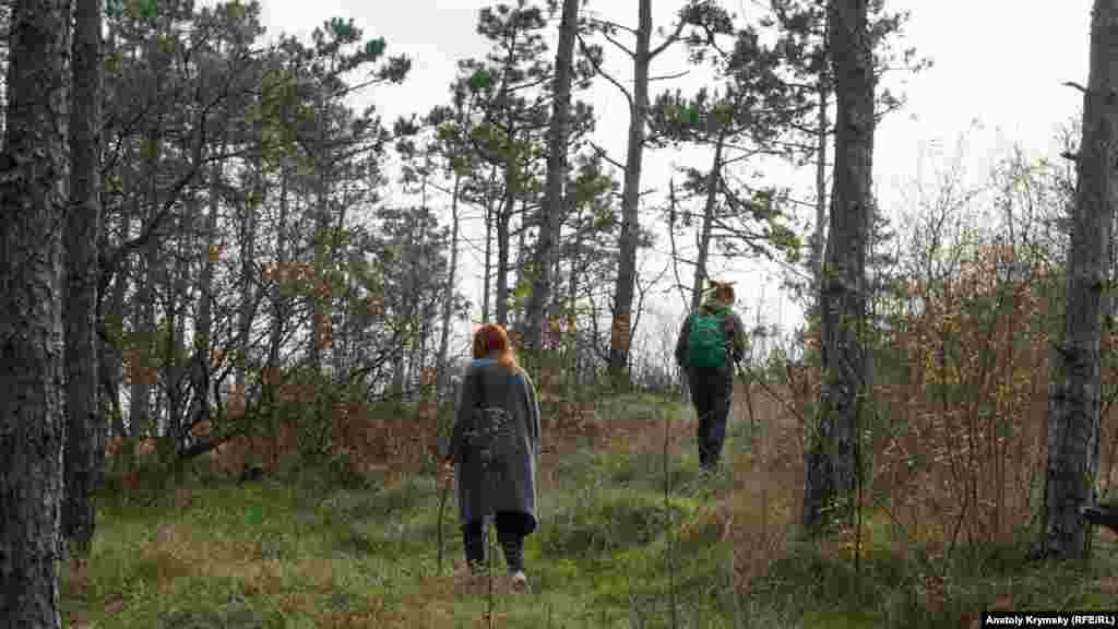 Для цієї молодої пари, як виявилося, збір грибів – лише привід прогулятися в лісі