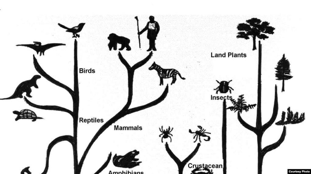 дерево еволюції