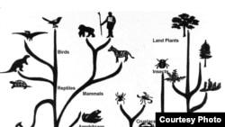 Разнообразие видов росло по гиперболе. С появлением человека население Земли стало расти по тому же закону. Сегодня мы подошли к пределу