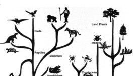 Разнообразие видов росло по гиперболе. С появлением человека население Земли стало расти по тому же закону. Сегодня мы подошли к пределу.