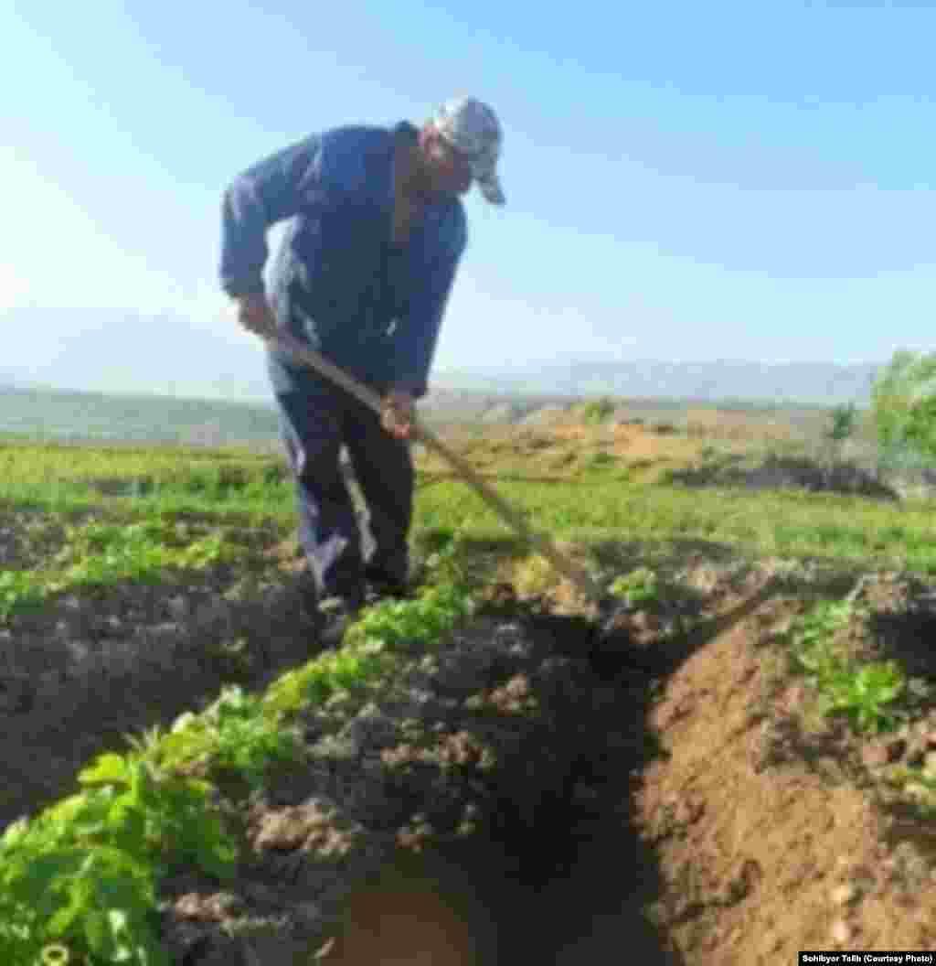 Мужчины приступают к полевым работам